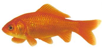 Aquarium/ vissen